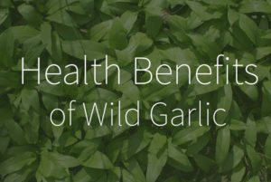 Health Benefits of Wild Garlic