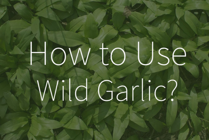 What to do with wild garlic?