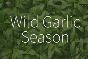 When does start the wild garlic season?