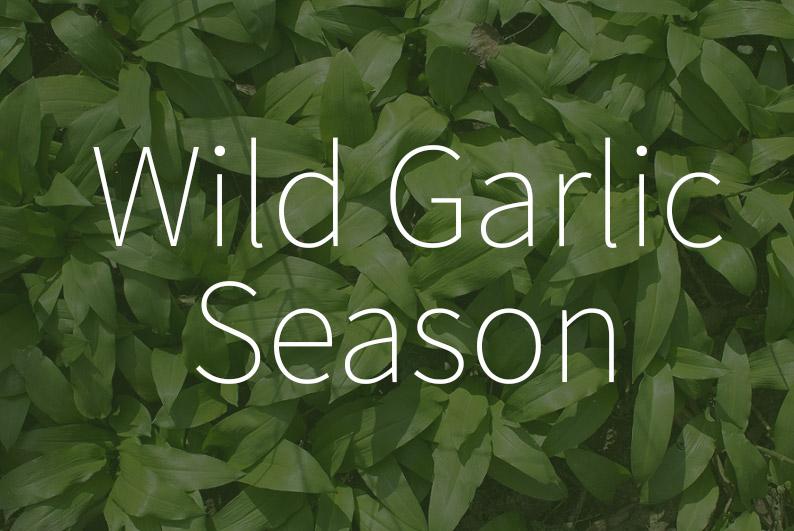 When does start the wild garlic season?